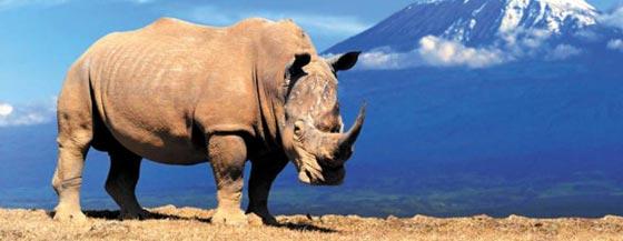 북부흰코뿔소
