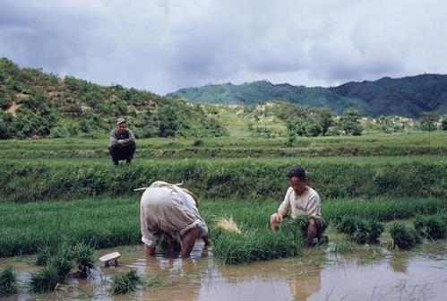 농부들이 모내기하는 모습을 바라보는 미군 병사. 1953년 6월 / 연합뉴스