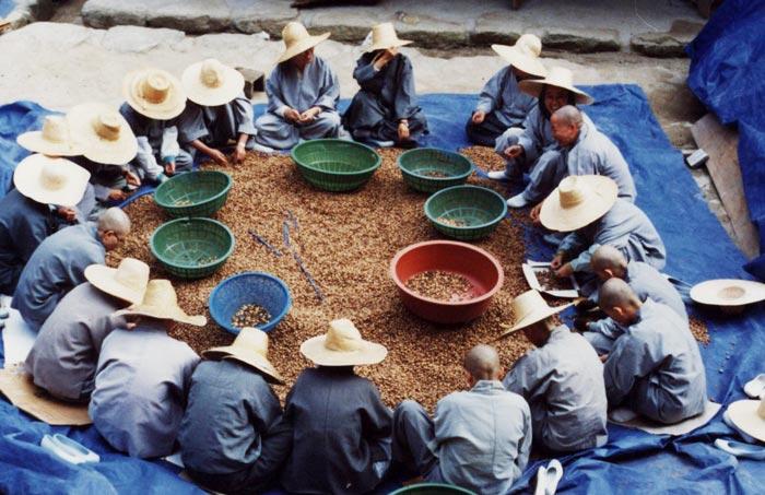 청암사 승가대학 스님들이 둥그렇게 둘러앉아 묵을 쑤기 위해 도토리 껍질을 까고 있는 모습.