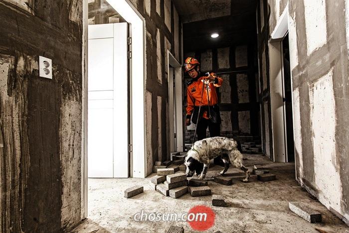 중앙119구조본부 인명구조견센터에서 화재탐지견 '다솔이'가 훈련관과 함께 방화(放火) 증거물을 찾는 훈련을 하고 있다. 화재탐지견은 유류 검지기에 반응하지 않는 미세한 휘발유 성분까지 찾을 수 있다. 대구=이신영 영상미디어 기자