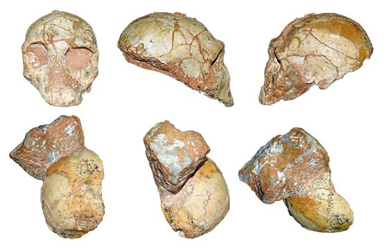 그리스 아피디마 동굴에서 나온 17만년 전 네안데르탈인 두개골 화석(윗줄)과 21만년 전 호모사피엔스 화석.