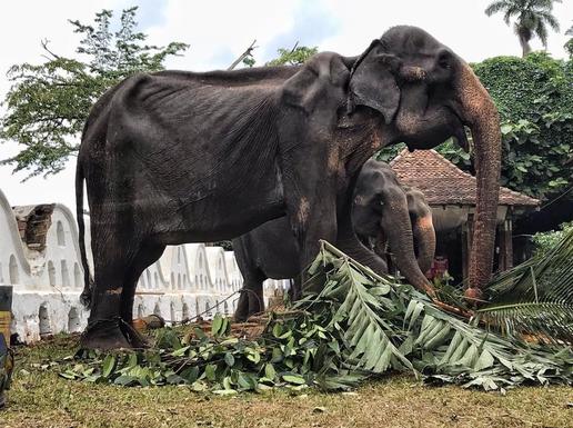 코끼리 구호재단이 공개한 앙상한 모습의 코끼리 사진/코끼리 구호재단 페이스북 캡처