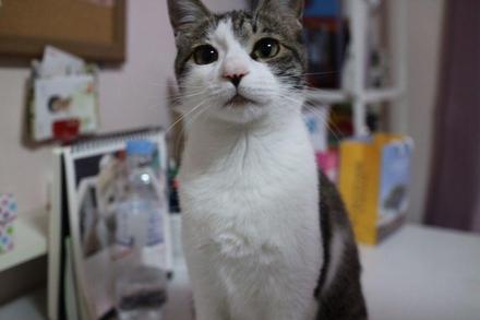 """고양이 보험시장 커지는데…""""아직은 적금이 낫겠네"""""""