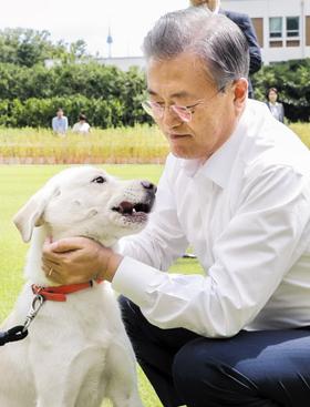 문재인 대통령이 30일 청와대에서 입양을 앞둔 풍산개의 목덜미를 어루만지고 있다. 이 개는 북한에서 청와대로 보낸 풍산개 암컷에게서 지난해 11월 태어난 6마리 중 하나다.