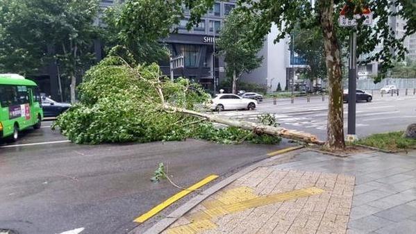지난 7일 서울 마포대로 공덕5거리 근처의 가로수가 태풍 링링에 꺾여 도로로 쓰러져 있다. /연합뉴스
