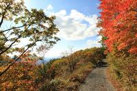 천상의 숲길 걸으며 아름다운 가을을 만끽해보세요