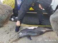제주서 멸종위기 보호종 돌고래 2마리 죽은 채 발견