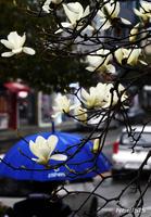 봄 시작 알리는 춘분, 비 그치면서 쌀쌀해져