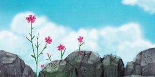 [가슴으로 읽는 동시] 바위와 패랭이꽃