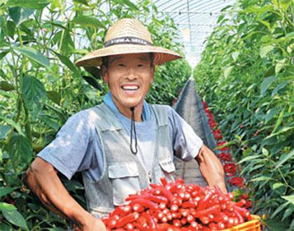 '귀농 4년 만에 연구하는 농부로 변신… 고추 하나로 3억 벌었죠'