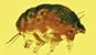 [IF] [사이언스 샷] 3000만년 전 호박 속에 갇힌 0.1㎜ '곰팡이 돼지' 발견