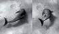 [IF] 병코돌고래, 인간보다 더 심하게 오른쪽 많이 쓴다