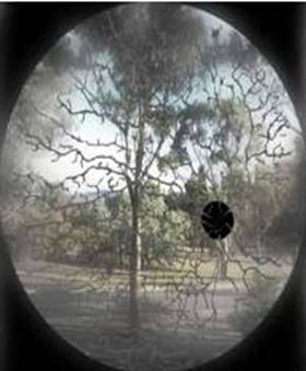 뇌가 해석하기 전 망막에 닿은 원래 영상엔 수많은 그림자들과 맹점이 있다.