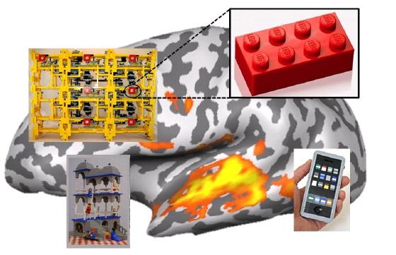 똑같이 생긴 레고 블록으로 여러가지 모양을 만들듯이, 우리 뇌도 비슷하게 생긴 '회로망'들의 조합으로 다양한 기능을 수행한다.