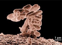 장내세균 사진