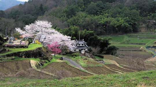 에세이 '시골은 그런 것이 아니다'―일본의 어느 시골