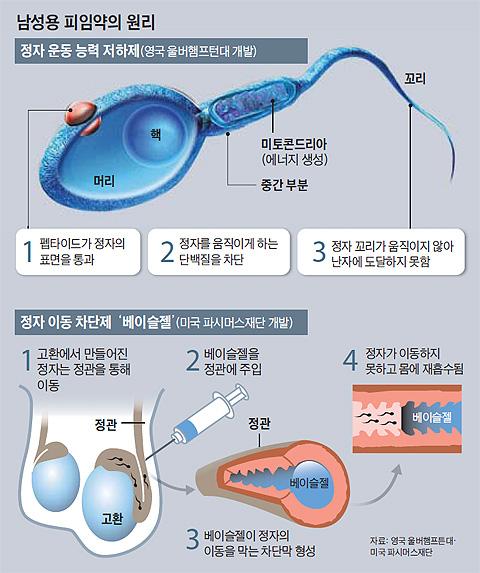 남성용 피임약의 원리