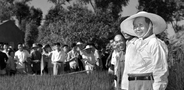 보통보다 모를 더 촘촘하게 심은 '배게 심기 농법'. 하지만 쌀 생산량은 급감했고 5년 사이 약 4500만명이 숨졌다. 이 중 250만명은 처형됐다는 게 디쾨터의 주장이다. 1958년 8월 톈진 교외를 시찰하고 있는 마오쩌둥.