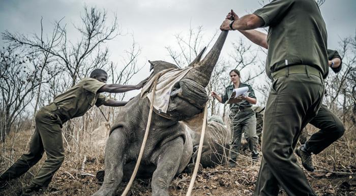 생명체 멸종 속도, 인류가 나타난 뒤 1000배 빨라졌다