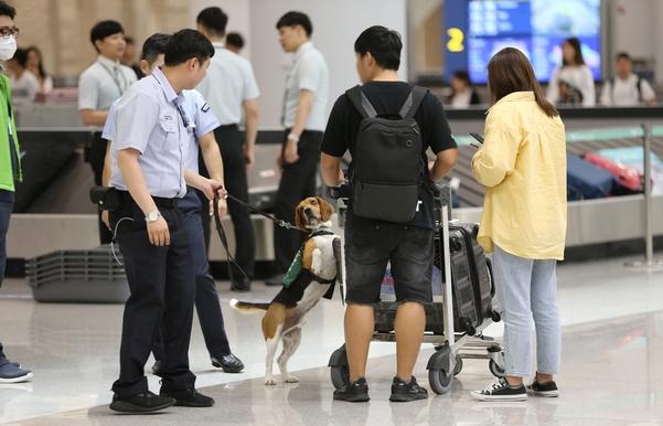 입국장 내 수하물수취대에서 검역탐지견이 여행객들의 짐을 검사하고 있다. /남강호 기자