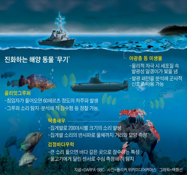 진화하는 해양 동물 무기 그래픽