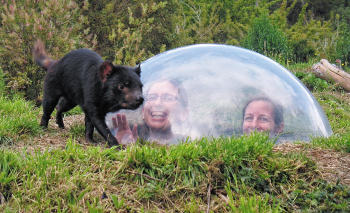 동물은 야생에, 인간은 우리에? - 호주 태즈메이니아데블 언주(UnZoo)에선 '보는 자'와 '보이는 자'가 보통 동물원과는 정반대다. 때로 인간은 야생 태즈메이니아데블을 보기 위해 투명한 반구 안에 들어가야 한다. 보고 싶은 동물이 안 나타나도 어쩔 수 없다.