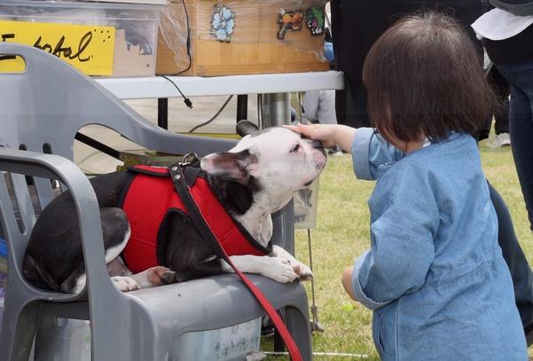 지난 5월 4일 제주시민복지타운광장에서 열린 '2019 반려동물 페스티벌'을 찾은 아이가 행사장에서 만난 강아지를 쓰다듬고 있다. 사진은 기사와 직접적 관련 없음. /연합뉴스