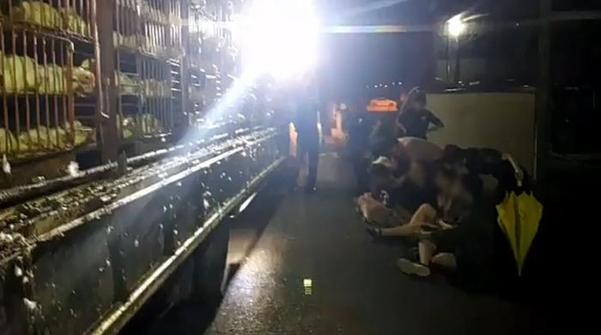 디엑스이서울 회원들이 지난 6일 충북 충주 한 도계장 입구를 막는 시위를 하고 있다. /디엑스이서울 페이스북
