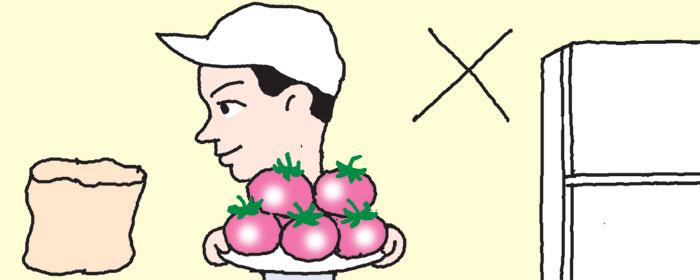 [리빙포인트] 여름 토마토는 상온에서 보관을