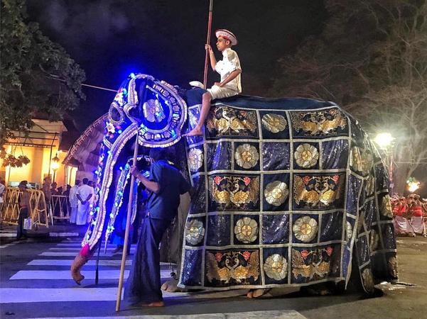 스리랑카 에살라  페라헤라 축제에 동원된 코끼리 사진/코끼리 구호단체 페이스북 캡처
