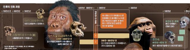 인류의 진화 과정 그래픽
