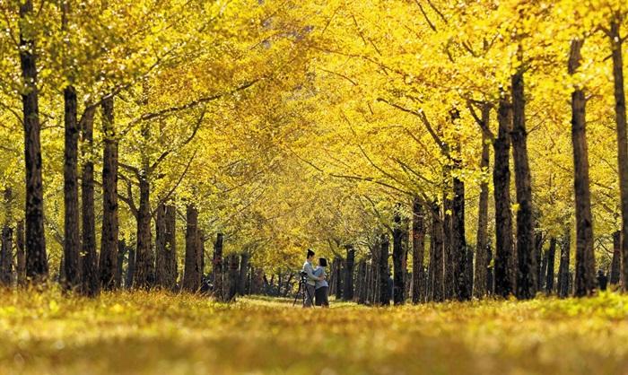 금빛 비밀의 숲