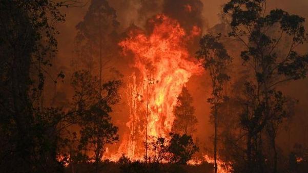 지난 8일(현지 시각)부터 호주 뉴스우스웨일즈주에서 발생한 산불의 모습./블룸버그