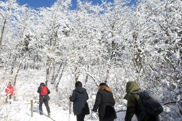 지난달 29일 등산객들이 눈꽃이 만발한 강원 평창군 대관령면 등산로를 오르고 있는 모습. /연합뉴스
