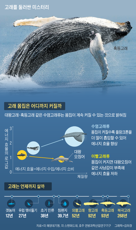 고래를 둘러싼 미스터리 정리 그래픽