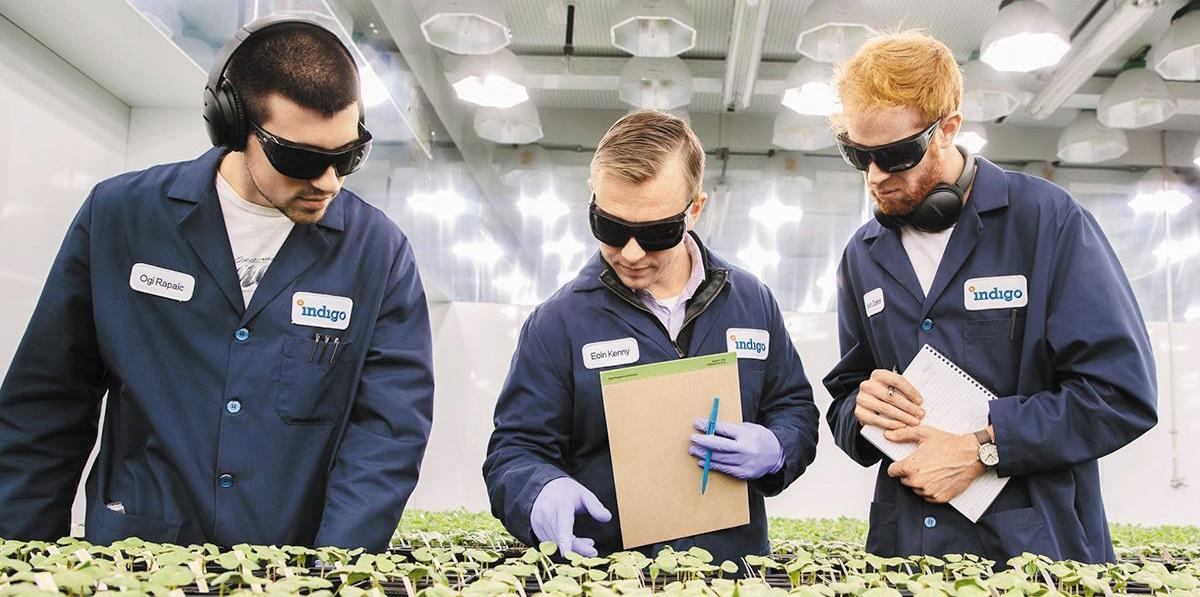 인디고 애그리컬처 과학자들의 목표는 극한 환경에서 살아남는 농산물 품종을 개발하는 것이다.