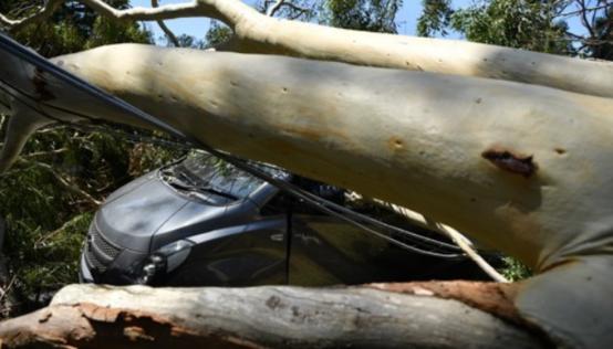 호주 시드니 남부 카링바에서 폭풍우에 쓰러진 나무 밑에 깔린 자동차 EPA/JOEL CARRETT AUSTRALIA AND NEW ZEALAND OUT