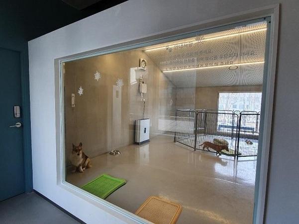 양재동 서초동물사랑센터에서 운영하는 설연휴 반려견 쉼터 모습./권유정 기자