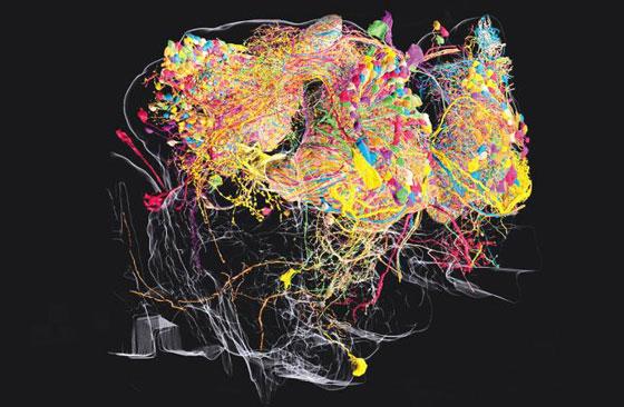 초파리의 3D 뇌 지도… AI로 最高해상도 구현