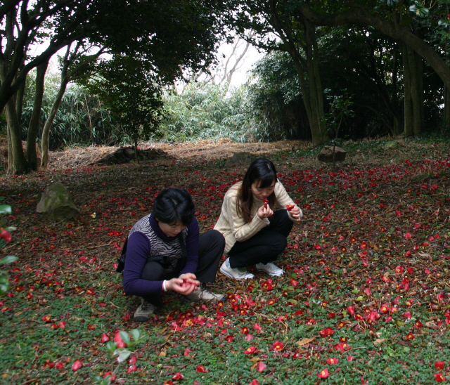 ◇여수 오동도. 동백꽃을 줍고 있는 여행객의 모습.