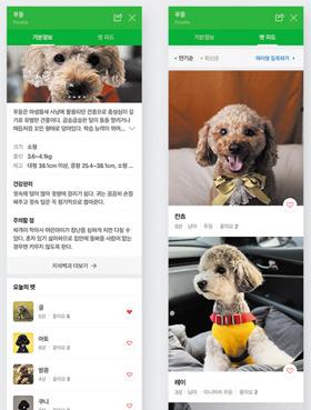 네이버가 최근 선보인 '펫(반려동물) 검색' 서비스에서 푸들을 검색하면 나오는 화면.