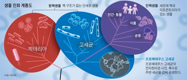 생물 진화 계통도 그래픽