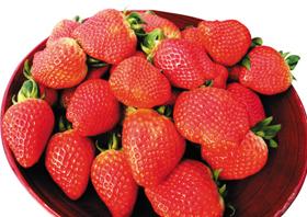 논산 딸기 사진