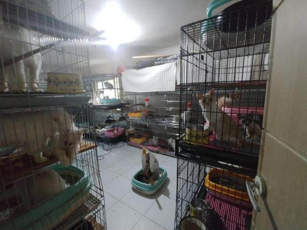 철창에 갇힌 고양이들의 모습. /연합뉴스