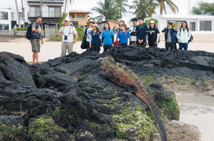 지스트-칼텍 '진화생물학' 강좌에 참여한 학생들이 필드트립 현지 전문가로부터 갈라파고스섬에만 서식하는 갈라파고스 해양 이구아나에 대해 설명을 듣고 있다. /지스트 제공