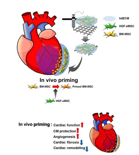 바이오잉크 활용한 심근경색 줄기세포 치료/포스텍