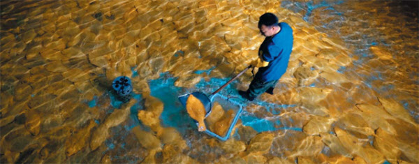 제주도에 있는 영어조합법인 해연의 황금넙치 양식장에서 한 직원이 황금넙치를 잡아 바구니에 담고 있다. /해양수산부