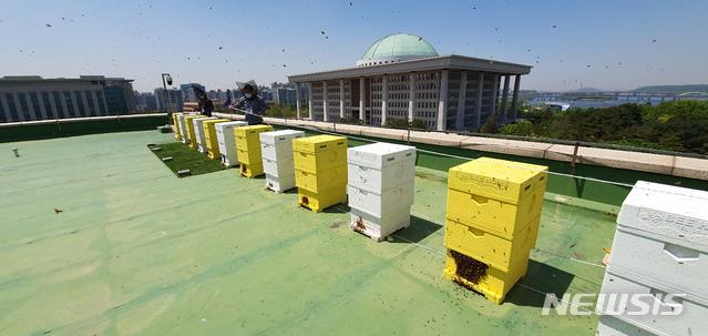 안상규벌꿀, 여의도 국회의사당에서 벌꿀 수확