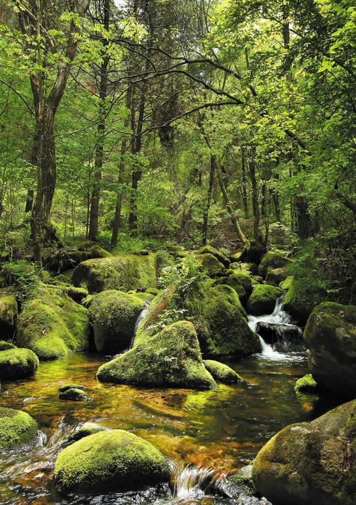원시의 숲을 만날 수 있는 영월 상동이끼계곡. 푸른 이끼로 덮인 계곡의 풍경이 신비롭다. 양수열 영상미디어 기자