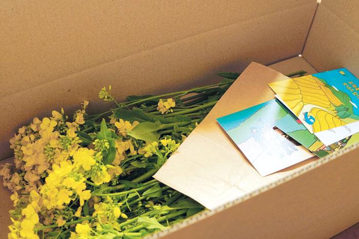 팜프라에서 보낸 '유채꽃 축제' 택배 실물 사진.